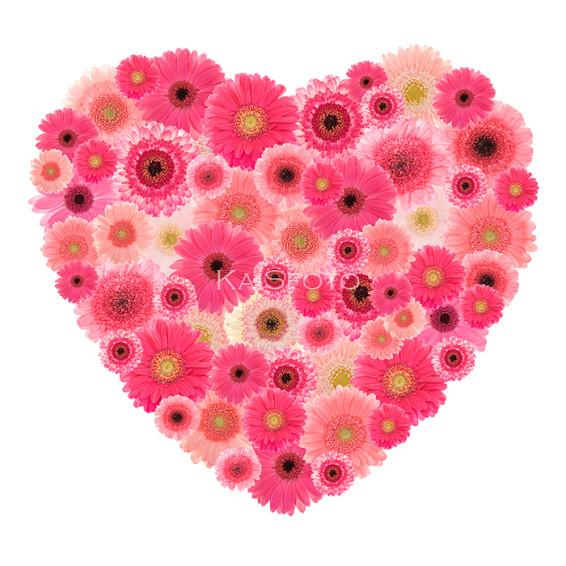 roosa-gerberate-süda